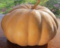 In the Vegetable Garden on Linnaeus Day: Seminole Squash