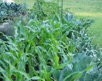Five Simple Steps to a Successful Vegetable Garden
