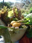 The makings of a rustic garden salad