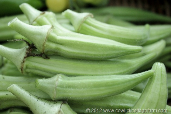 Fresh okra, Cowlick Cottage Farm