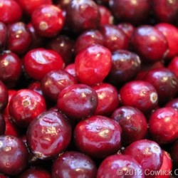 Fresh Cranberries for Cranberry Freezer Jam, Cowlick Cottage Farm
