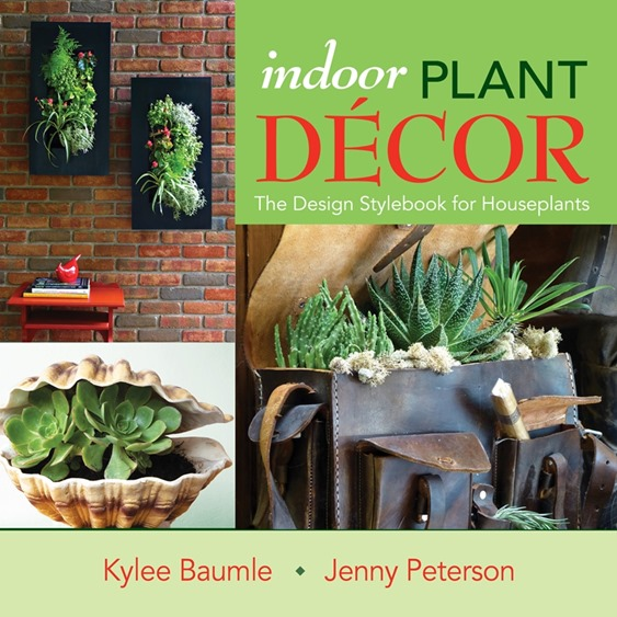 Indoor Plant Décor