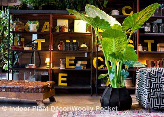 Indoor Plant Décor Virtual Blog Tour and a Seed Keeper Garden Giveaway!