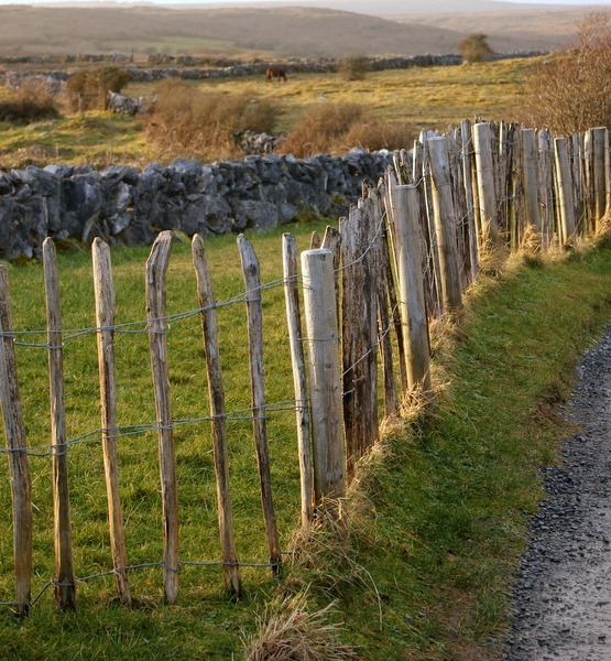 Fence at Sunset, Ireland