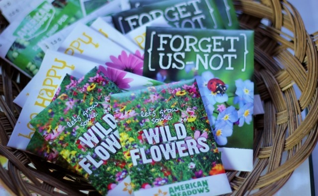 Grow Wildflowers for a Better Vegetable Garden